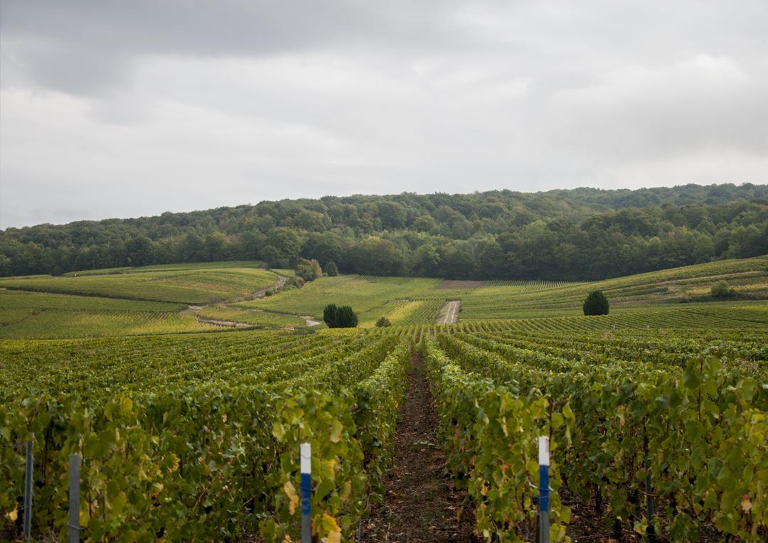 chaire idis-projet-PNR-Montagne-Reims07